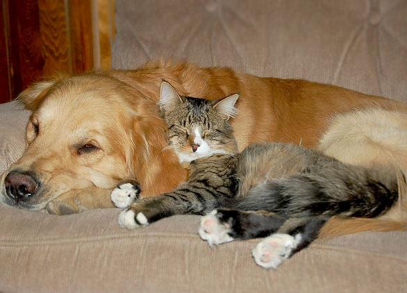 cat-dog3