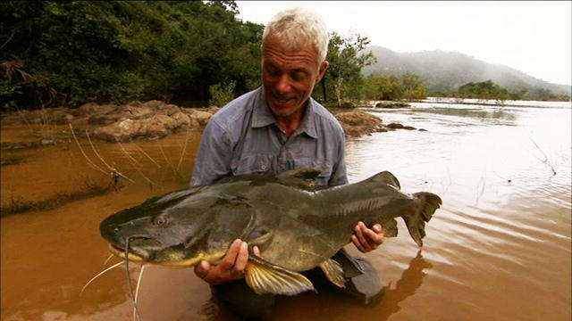 Amazon river catfish
