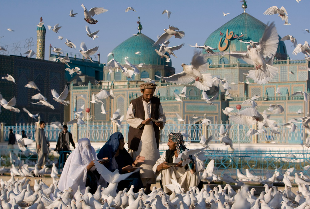 white pigeon muslim The holy month of ramazan unites muslim around the world as the devotes observe myriad traditions  a white pigeon flies near a mosque in colombo, sri lanka photo: reuters.