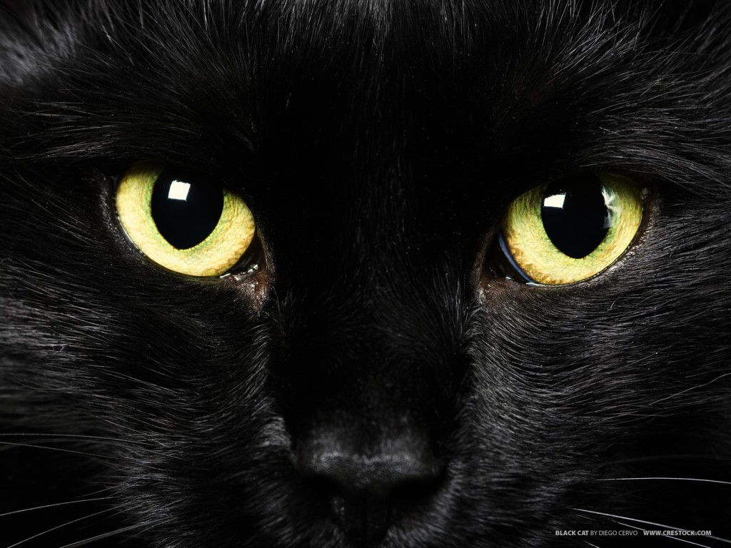 16 fascinating arab superstitions blackcat