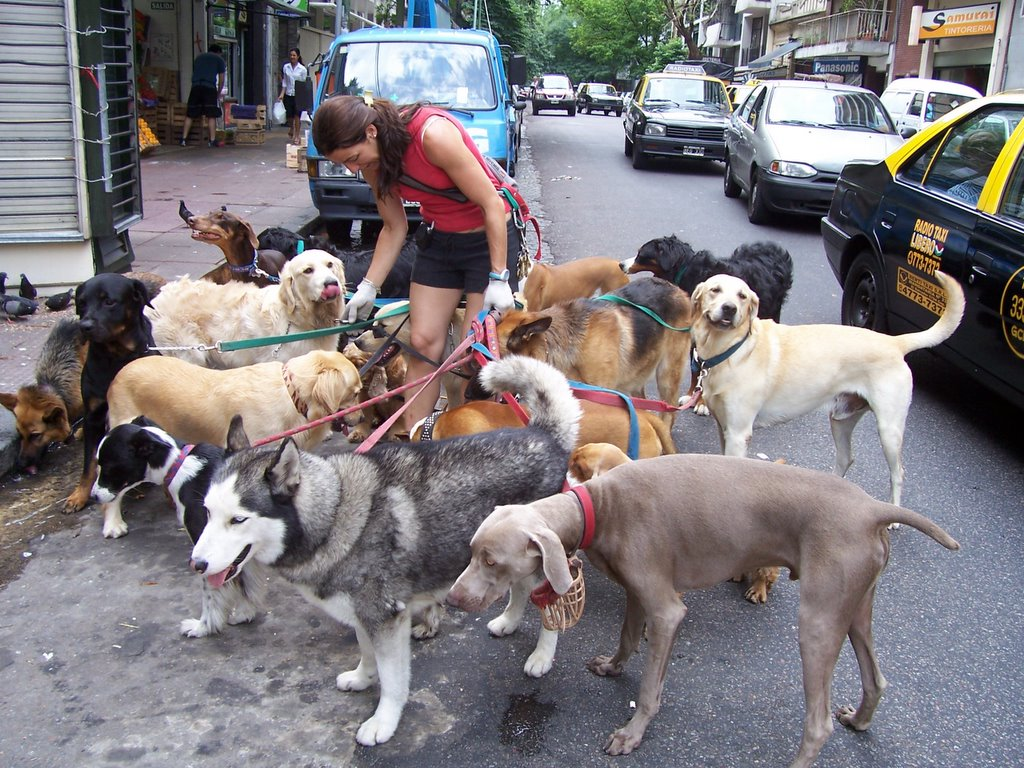 10 summer jobs that aren39t cool in the middle east for Puppy dog walker