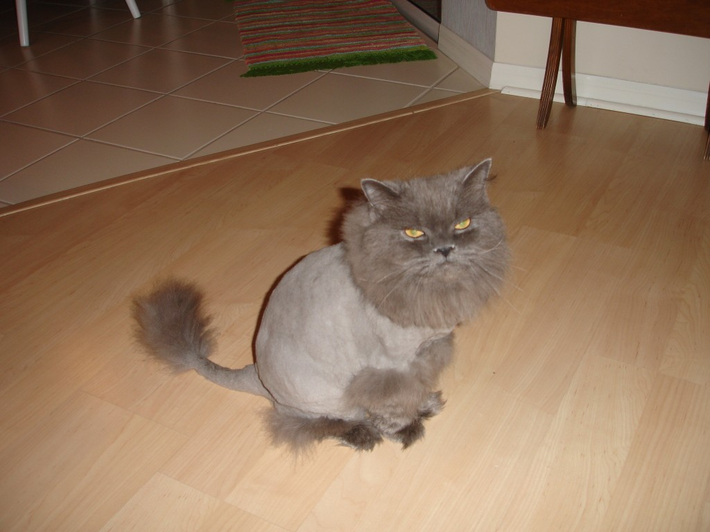 Why You Should Get Your Cat A Lion Cut This Summer