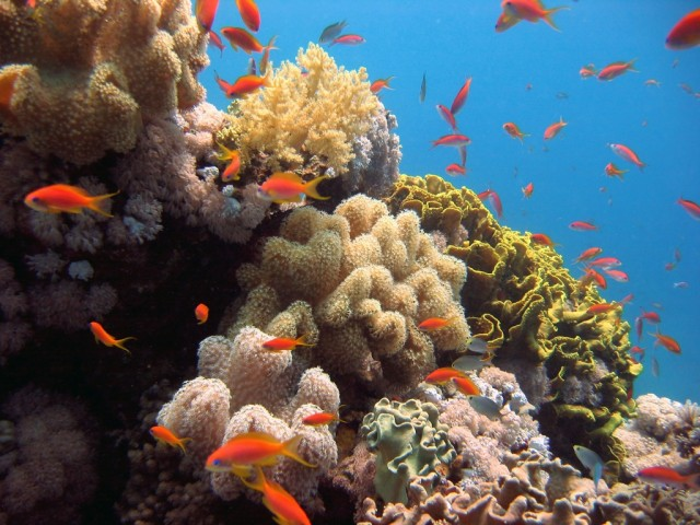 red-sea-diving-sudan