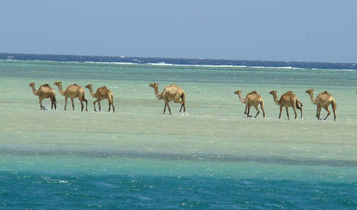 The Red Sea (Via)