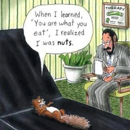 squirrel-therapy