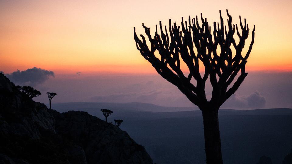 Socotra Island (Juan Herreo/Via)