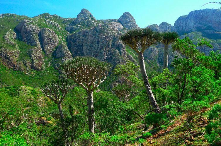 Socotra Island (Ross Hayden/Via)