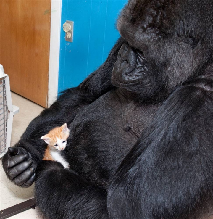 Unlikely Animal Friendships That Will Make You Melt - 15 unlikely animal friendships will melt heart