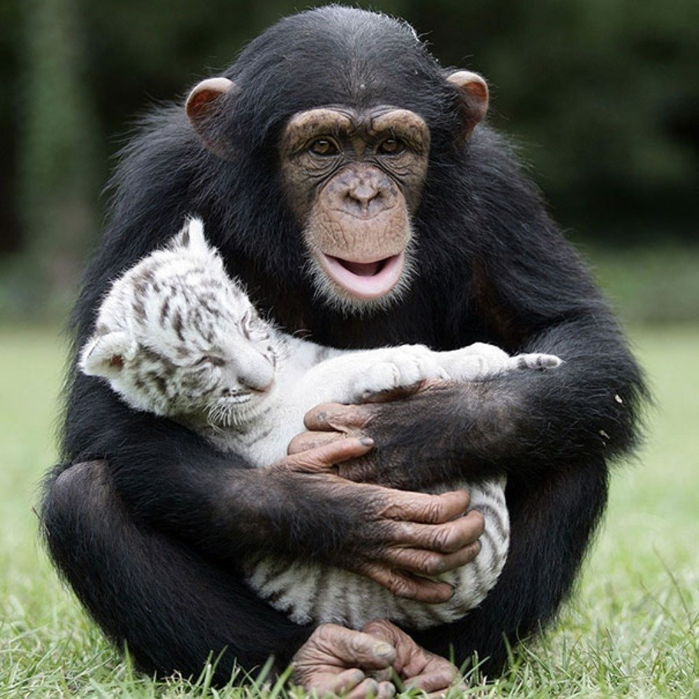You Re Amazing Animals: 16 Unlikely Animal Friendships That Will Make You Melt