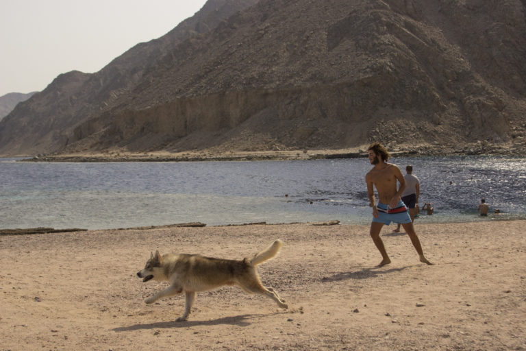 Nadine Arab – Egypt's most pet friendly town2