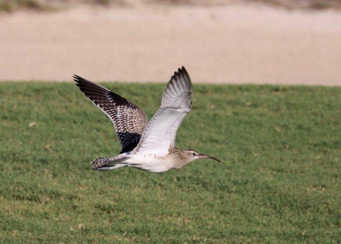 rare-bird-uae-abu-dhabi